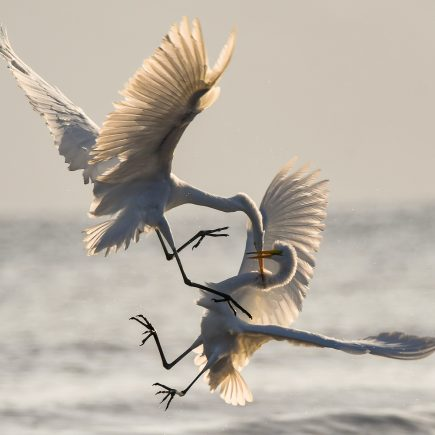 birds-conflict-content-marketing