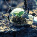 Was Unternehmen von der grünen Suchmaschine Ecosia lernen können